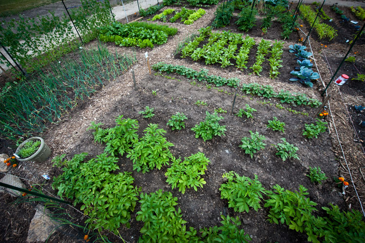 The community garden movement in America